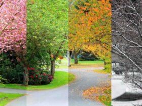 Regarder Seasons en Direct